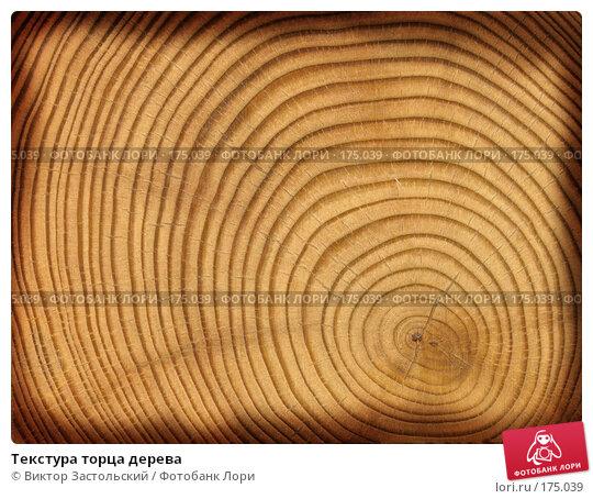 Текстура торца дерева, фото № 175039, снято 21 августа 2017 г. (c) Виктор Застольский / Фотобанк Лори