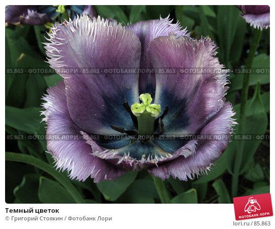 Темный цветок, фото № 85863, снято 27 мая 2007 г. (c) Григорий Стоякин / Фотобанк Лори