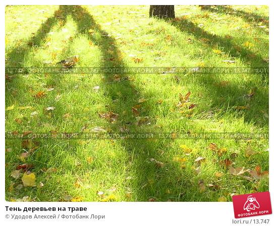 Тень деревьев на траве, фото № 13747, снято 1 октября 2005 г. (c) Удодов Алексей / Фотобанк Лори