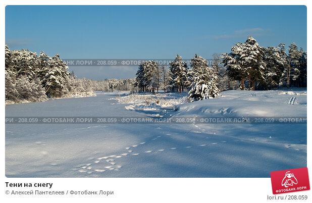 Тени на снегу, фото № 208059, снято 1 декабря 2007 г. (c) Алексей Пантелеев / Фотобанк Лори