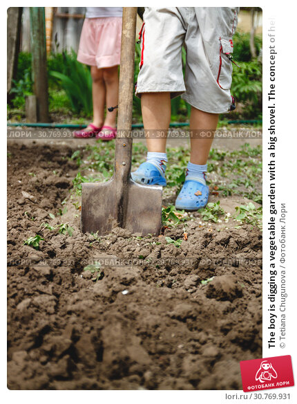 Купить «The boy is digging a vegetable garden with a big shovel. The concept of helping adults and work since childhood», фото № 30769931, снято 8 мая 2017 г. (c) Tetiana Chugunova / Фотобанк Лори