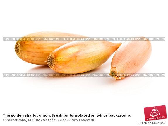The golden shallot onion. Fresh bulbs isolated on white background. Стоковое фото, фотограф Zoonar.com/JIRI HERA / easy Fotostock / Фотобанк Лори