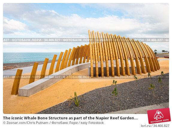 The iconic Whale Bone Structure as part of the Napier Reef Garden... Стоковое фото, фотограф Zoonar.com/Chris Putnam / easy Fotostock / Фотобанк Лори