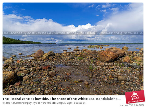 The littoral zone at low tide. The shore of the White Sea. Kandalaksha... Стоковое фото, фотограф Zoonar.com/Sergey Rybin / age Fotostock / Фотобанк Лори