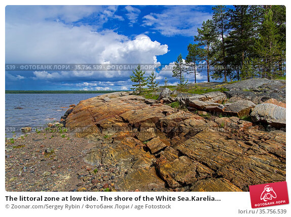 The littoral zone at low tide. The shore of the White Sea.Karelia... Стоковое фото, фотограф Zoonar.com/Sergey Rybin / age Fotostock / Фотобанк Лори
