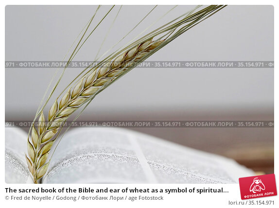 The sacred book of the Bible and ear of wheat as a symbol of spiritual... Стоковое фото, фотограф Fred de Noyelle / Godong / age Fotostock / Фотобанк Лори