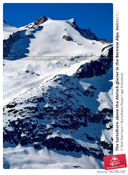 The Sattelhorn above the Aletsch glacier in the Bernese Alps, Switzerland... Стоковое фото, фотограф Neil Harrison / age Fotostock / Фотобанк Лори