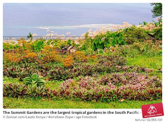 The Summit Gardens are the largest tropical gardens in the South Pacific - Port Vila, Efate Island, Vanuatu. Стоковое фото, фотограф Zoonar.com/Laszlo Konya / age Fotostock / Фотобанк Лори