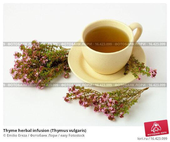 Купить «Thyme herbal infusion (Thymus vulgaris)», фото № 16423099, снято 20 марта 2019 г. (c) easy Fotostock / Фотобанк Лори