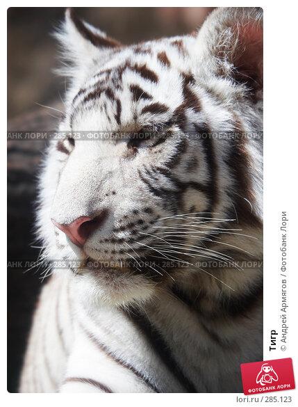 Тигр, фото № 285123, снято 1 июня 2006 г. (c) Андрей Армягов / Фотобанк Лори