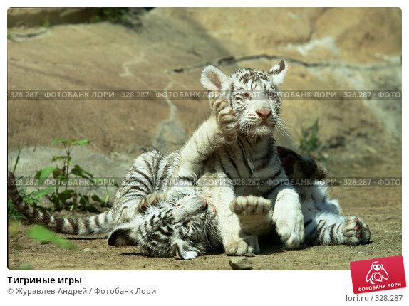 Тигриные игры, эксклюзивное фото № 328287, снято 18 июня 2008 г. (c) Журавлев Андрей / Фотобанк Лори