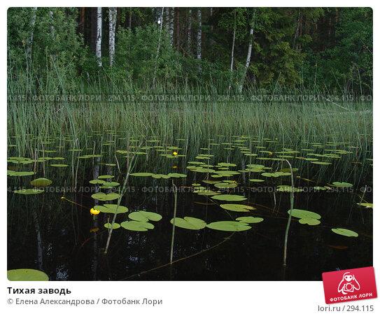 Тихая заводь, фото № 294115, снято 2 июля 2007 г. (c) Елена Александрова / Фотобанк Лори