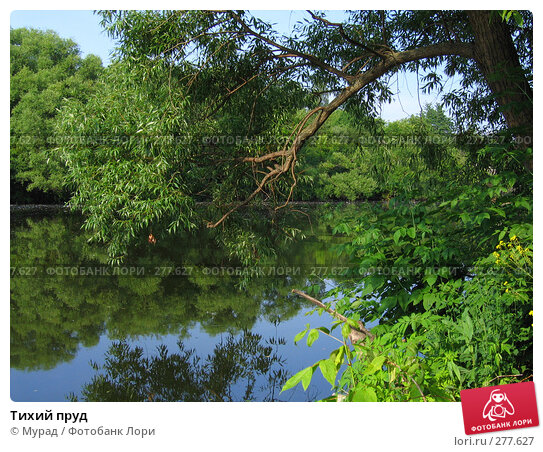 Тихий пруд, фото № 277627, снято 23 июня 2006 г. (c) Мурад / Фотобанк Лори