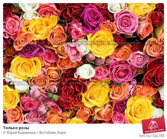 Только розы, фото № 122155, снято 20 октября 2007 г. (c) Юрий Борисенко / Фотобанк Лори