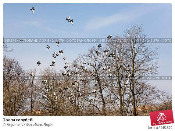 Толпа голубей, фото № 245379, снято 5 апреля 2008 г. (c) Argument / Фотобанк Лори