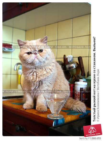 Видео кота со стаканом