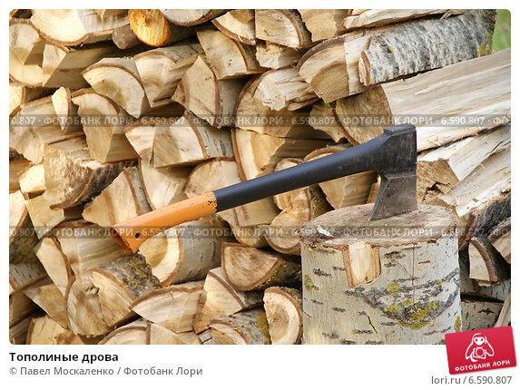 Купить «Тополиные дрова», фото № 6590807, снято 27 сентября 2014 г. (c) Павел Москаленко / Фотобанк Лори