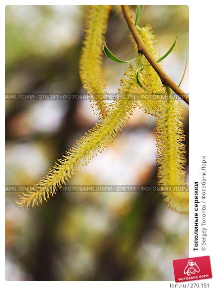 Тополиные сережки, фото № 270151, снято 20 апреля 2008 г. (c) Sergey Toronto / Фотобанк Лори
