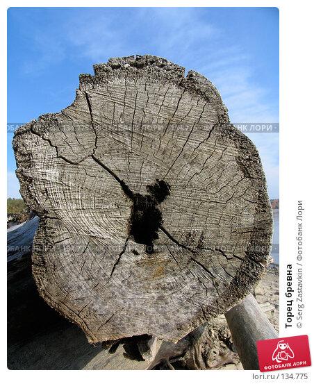 Торец бревна, фото № 134775, снято 2 октября 2005 г. (c) Serg Zastavkin / Фотобанк Лори