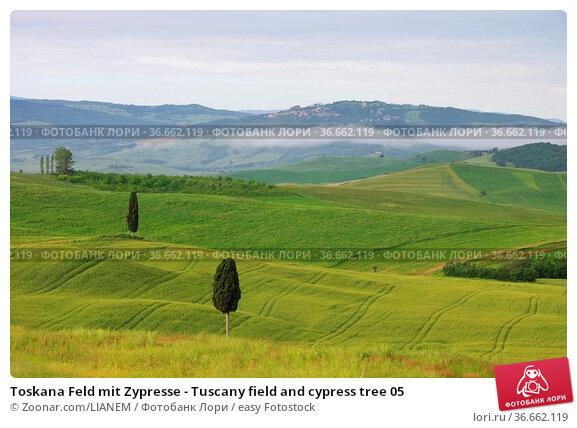 Toskana Feld mit Zypresse - Tuscany field and cypress tree 05. Стоковое фото, фотограф Zoonar.com/LIANEM / easy Fotostock / Фотобанк Лори