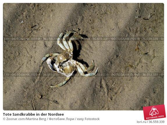 Tote Sandkrabbe in der Nordsee. Стоковое фото, фотограф Zoonar.com/Martina Berg / easy Fotostock / Фотобанк Лори