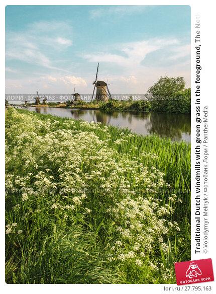 Купить «Traditional Dutch windmills with green grass in the foreground, The Netherlands», фото № 27795163, снято 22 февраля 2018 г. (c) PantherMedia / Фотобанк Лори