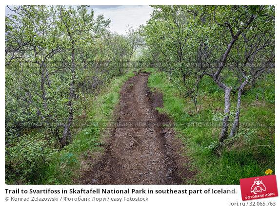 Trail to Svartifoss in Skaftafell National Park in southeast part of Iceland. Стоковое фото, фотограф Konrad Zelazowski / easy Fotostock / Фотобанк Лори