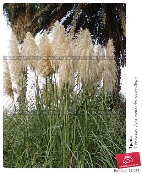 Трава, фото № 133055, снято 29 августа 2005 г. (c) Анастасия Лукьянова / Фотобанк Лори