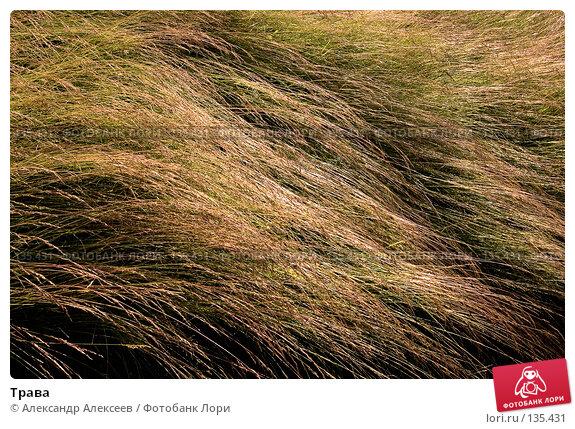 Трава, эксклюзивное фото № 135431, снято 8 июля 2007 г. (c) Александр Алексеев / Фотобанк Лори