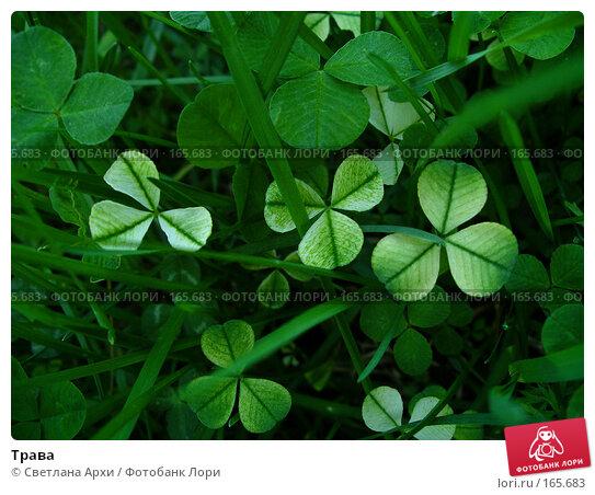 Трава, фото № 165683, снято 17 мая 2005 г. (c) Светлана Архи / Фотобанк Лори
