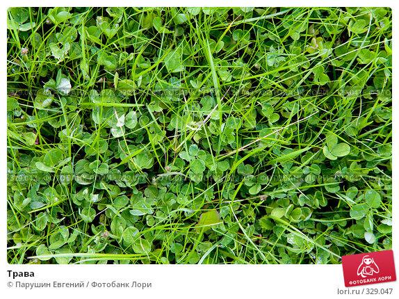 Трава, фото № 329047, снято 26 марта 2017 г. (c) Парушин Евгений / Фотобанк Лори