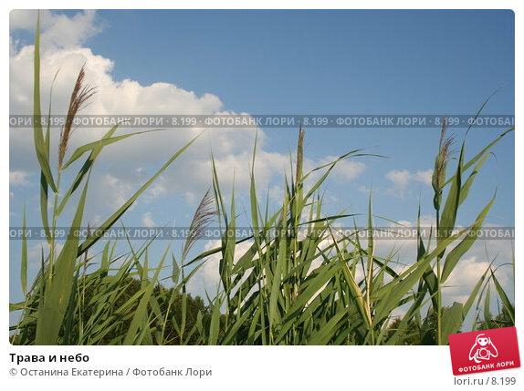 Трава и небо, фото № 8199, снято 13 июля 2006 г. (c) Останина Екатерина / Фотобанк Лори