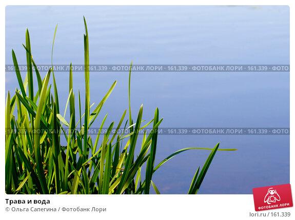 Трава и вода, фото № 161339, снято 18 мая 2007 г. (c) Ольга Сапегина / Фотобанк Лори