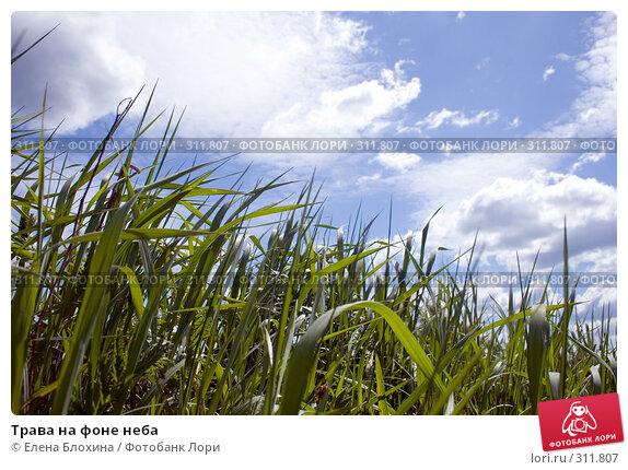 Трава на фоне неба, фото № 311807, снято 2 июня 2008 г. (c) Елена Блохина / Фотобанк Лори