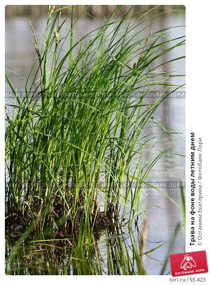 Купить «Трава на фоне воды летним днем», фото № 55423, снято 24 июня 2007 г. (c) Останина Екатерина / Фотобанк Лори