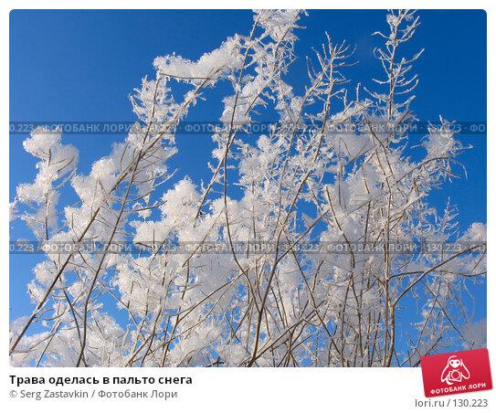 Трава оделась в пальто снега, фото № 130223, снято 18 декабря 2005 г. (c) Serg Zastavkin / Фотобанк Лори