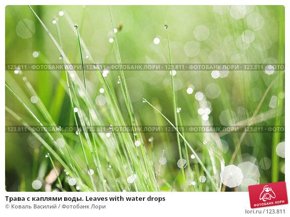Купить «Трава с каплями воды. Leaves with water drops», фото № 123811, снято 25 мая 2007 г. (c) Коваль Василий / Фотобанк Лори