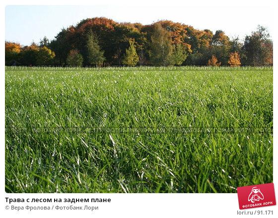 Трава с лесом на заднем плане, фото № 91171, снято 30 сентября 2007 г. (c) Вера Фролова / Фотобанк Лори
