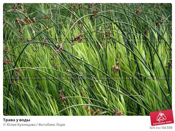 Трава у воды, фото № 64559, снято 22 июля 2007 г. (c) Юлия Кузнецова / Фотобанк Лори