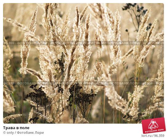 Трава в поле, фото № 96359, снято 23 октября 2005 г. (c) only / Фотобанк Лори