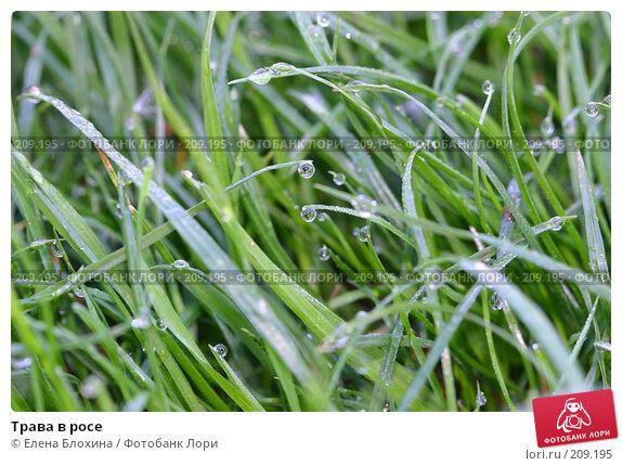 Трава в росе, фото № 209195, снято 20 мая 2007 г. (c) Елена Блохина / Фотобанк Лори
