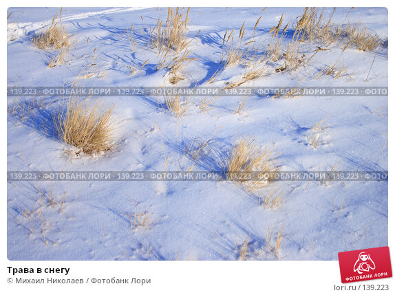 Трава в снегу, фото № 139223, снято 2 декабря 2007 г. (c) Михаил Николаев / Фотобанк Лори