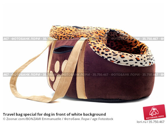 Travel bag special for dog in front of white background. Стоковое фото, фотограф Zoonar.com/BONZAMI Emmanuelle / age Fotostock / Фотобанк Лори