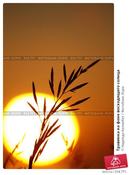 Травинка на фоне восходящего солнца, фото № 314771, снято 11 июня 2007 г. (c) Надежда Келембет / Фотобанк Лори