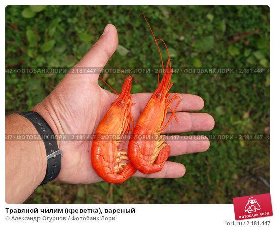 Купить «Травяной чилим (креветка), вареный», фото № 2181447, снято 5 октября 2010 г. (c) Александр Огурцов / Фотобанк Лори
