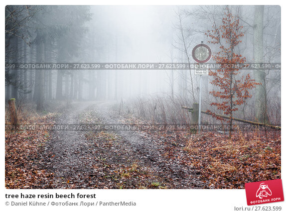 Купить «tree haze resin beech forest», фото № 27623599, снято 18 июня 2019 г. (c) PantherMedia / Фотобанк Лори