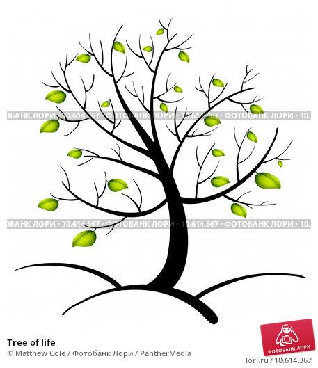 Tree of life. Стоковая иллюстрация, иллюстратор Matthew Cole / PantherMedia / Фотобанк Лори
