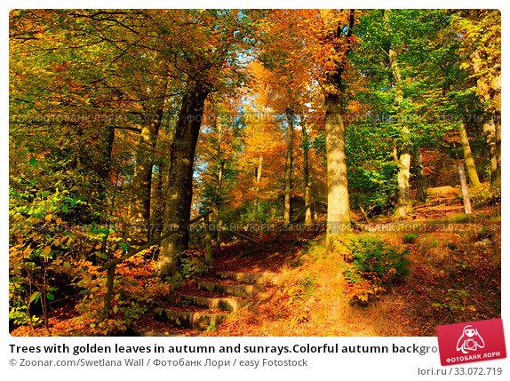 Купить «Trees with golden leaves in autumn and sunrays.Colorful autumn background.», фото № 33072719, снято 1 апреля 2020 г. (c) easy Fotostock / Фотобанк Лори