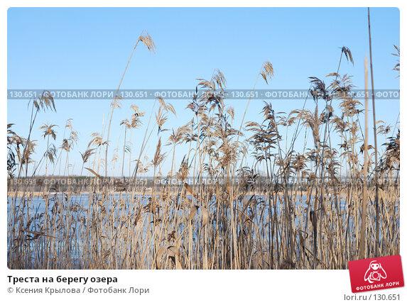 Треста на берегу озера, фото № 130651, снято 22 ноября 2007 г. (c) Ксения Крылова / Фотобанк Лори
