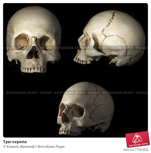 Три черепа, фото № 110023, снято 10 декабря 2016 г. (c) Коваль Василий / Фотобанк Лори